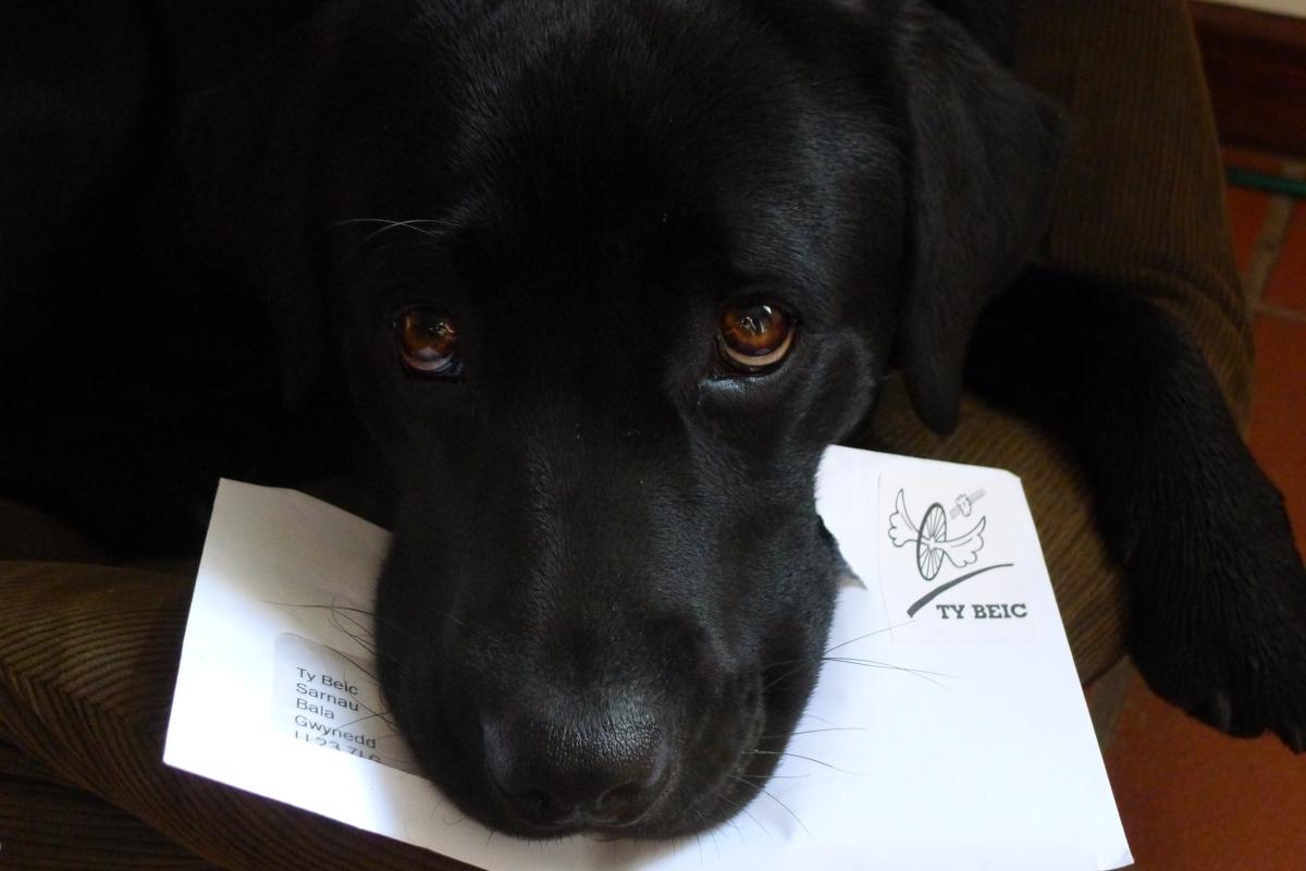 Jac hound