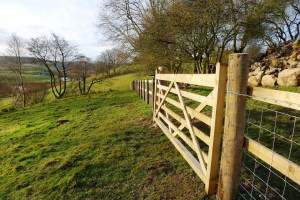 fencing and gate