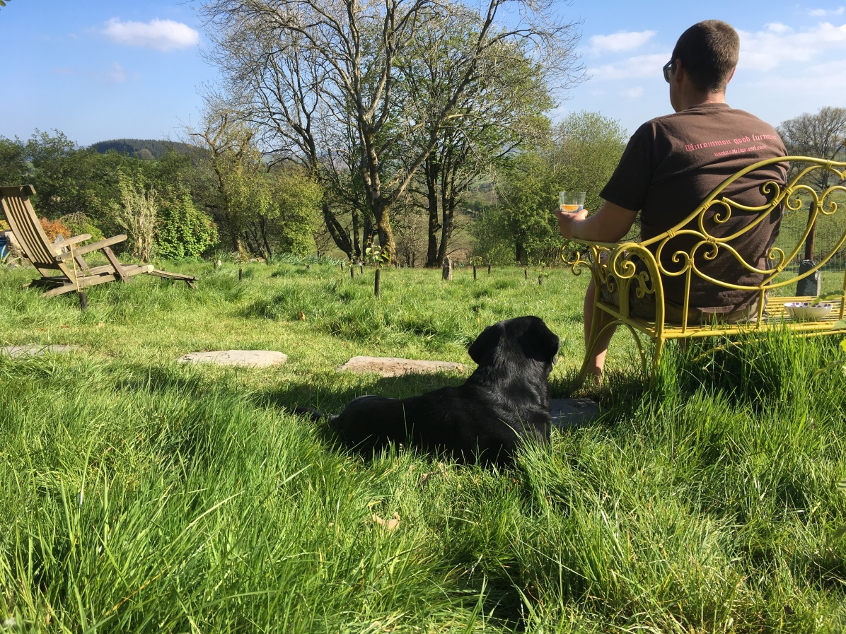 Self catering dog friendly