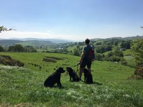 Dog walking holiday